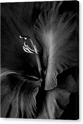 Black Velvet Gladiolia Flower Canvas Print by Jennie Marie Schell