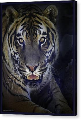 Black Velvet Tiger Canvas Print
