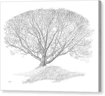 Black Walnut Canvas Print