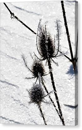 Black  White  Canvas Print by Paulina Szajek
