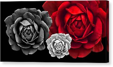 Black White Red Roses Abstract Canvas Print by Jennie Marie Schell
