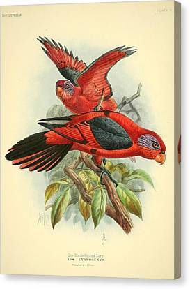 Black Winged Lory Canvas Print by Rob Dreyer