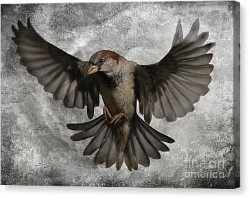Black Wings Canvas Print by Jim Wright