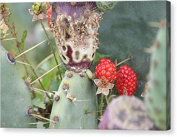 Blackberries Are Coming Canvas Print by Lorri Crossno