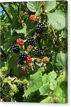 Blackberries Canvas Print by Susanne Baumann