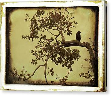 Vintage Blackbird In A Tree Canvas Print by Gothicrow Images