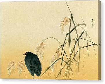 Blackbird Canvas Print by Japanese School
