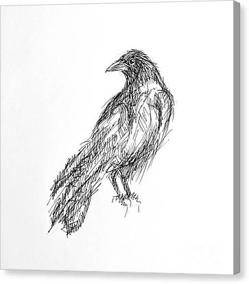 Canvas Print featuring the drawing Blackbird  by Nicole Gaitan