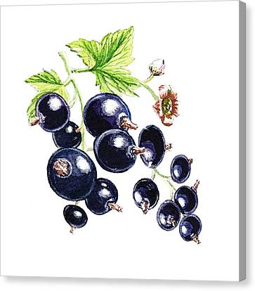 Blackcurrant Berries  Canvas Print