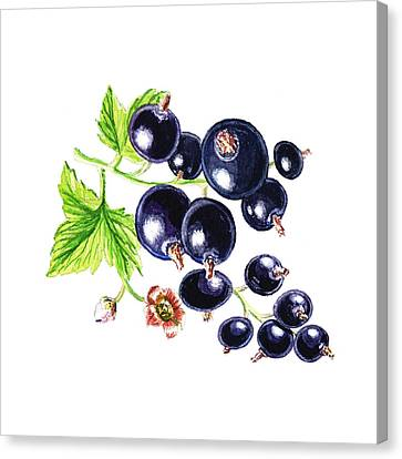 Blackcurrant Happy Berries Canvas Print