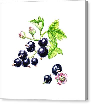 Blackcurrant Botanical Design Canvas Print