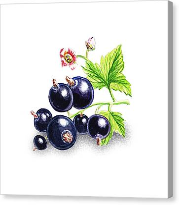 Blackcurrant Still Life Canvas Print