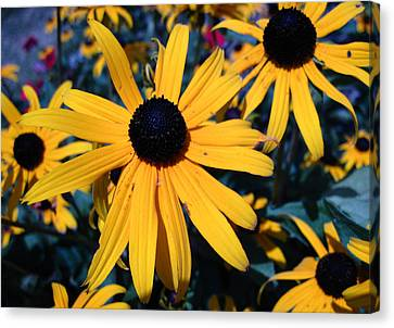 Canvas Print featuring the photograph Blackeyed Susan Abstract by Mary Bedy