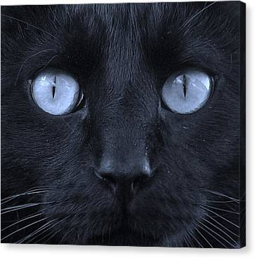 Blackie Blue Canvas Print by Elizabeth Sullivan