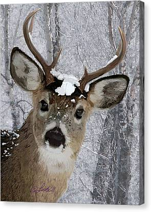 Blacktail Buck In Snow Canvas Print