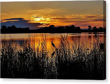 Blackwater Morning Canvas Print by Robert Geary