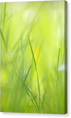Blades Of Grass - Green Spring Meadow - Abstract Soft Blurred Canvas Print by Matthias Hauser