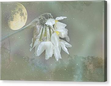 Blanche Canvas Print by Elaine Teague