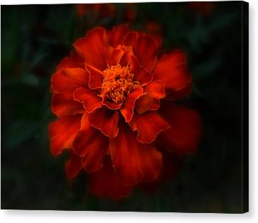 Blazing Marigold Canvas Print by Diannah Lynch