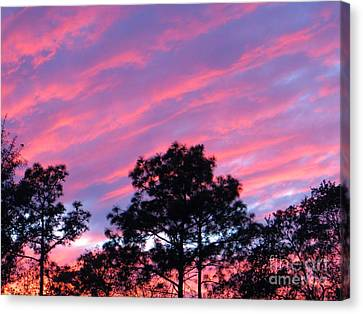 Canvas Print featuring the photograph Blazing Pines by Joy Hardee