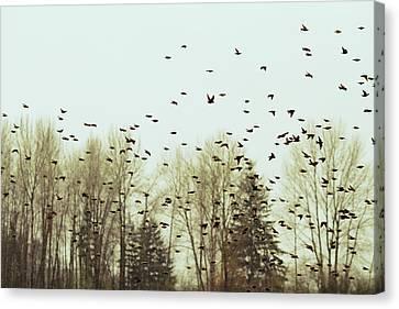 Bleak Mid-winter Canvas Print by Rebecca Cozart