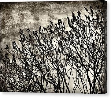 Bleak View Canvas Print