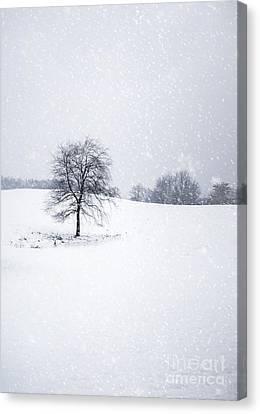 Maine Winter Canvas Print - Bleakest Essence by Evelina Kremsdorf