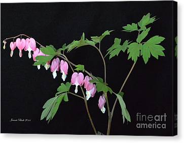 Canvas Print featuring the photograph Bleeding Hearts 2 by Jeannie Rhode