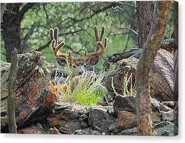 Blending In Canvas Print by Shane Bechler