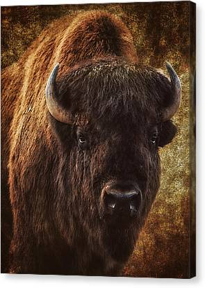 Bless The Beast Canvas Print by Ron  McGinnis
