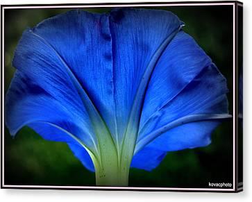Blessed Blue.. Canvas Print by David Kovac