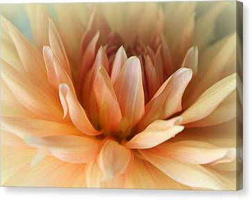 Angelical Canvas Print - Blessed  by The Art Of Marilyn Ridoutt-Greene