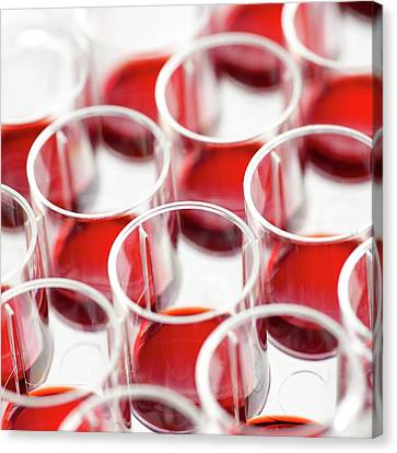 Blood In Multiwell Tray Canvas Print by Science Photo Library