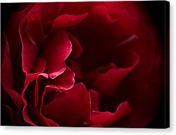 Blood Red Canvas Print by Jacqi Elmslie