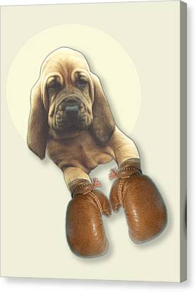 Bloodhound Boxer Canvas Print by Jimmy Collins