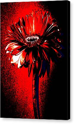 Bloody Mary Zinnia Canvas Print by Sherry Allen