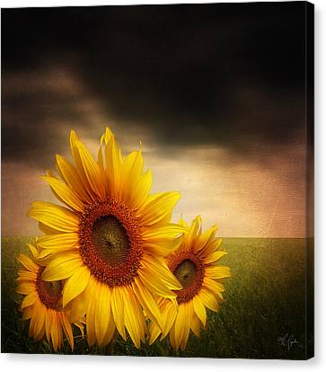 Bloom In Gloom- Sunflower Art Canvas Print by Lourry Legarde