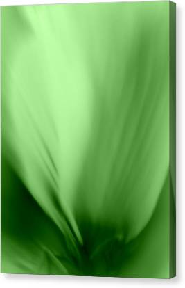 Bloom In Green Canvas Print by Mary Beth Landis