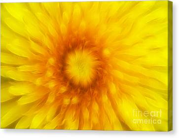 Bloom Of Dandelion Canvas Print by Michal Boubin