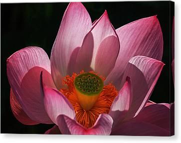 Bloom Canvas Print by Robert Pilkington