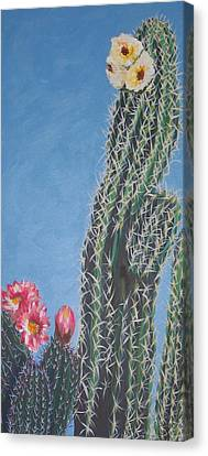 Bloomin Cactus Canvas Print by Marcia Weller-Wenbert