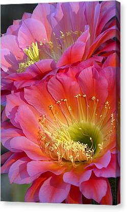 Bloomin' Twins Canvas Print