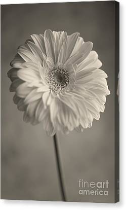Canvas Print featuring the photograph Blooming by Aiolos Greek Collections