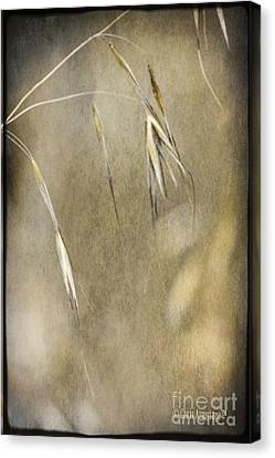 Canvas Print featuring the photograph Blooming And Seeding by Chris Armytage