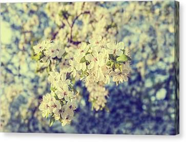 Blooming Apple Tree Vintage Canvas Print by Yevgeni Kacnelson