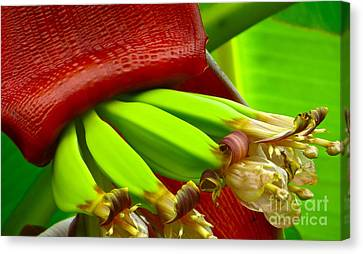 Canvas Print featuring the photograph Blooming Bananas by Joy Hardee