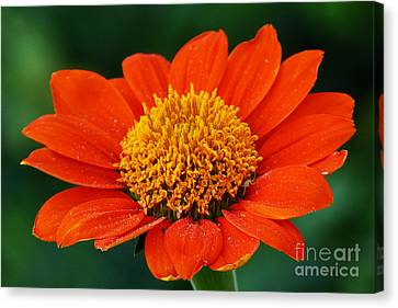 Blooming Flower Canvas Print