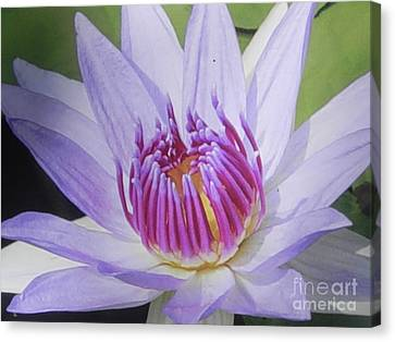 Canvas Print featuring the photograph Blooming For You by Chrisann Ellis