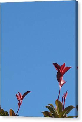 Blooming Leaves Canvas Print