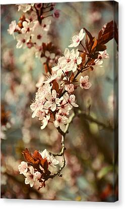 Blooming Spring Canvas Print by Gynt Art